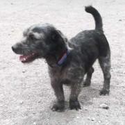 Berlu in der Auffangstation von SOS Hunde Gran Canaria
