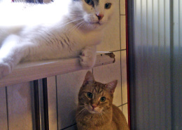 Katzenkumpels