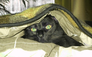 Hausversorgung Katzen